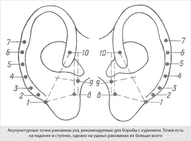 Акупунктурные точки раковины уха для иглоукалывания от курения