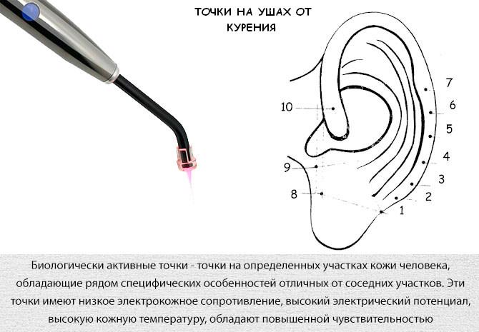 Биологически активные точки на ушах для рефлексотерапии против курения
